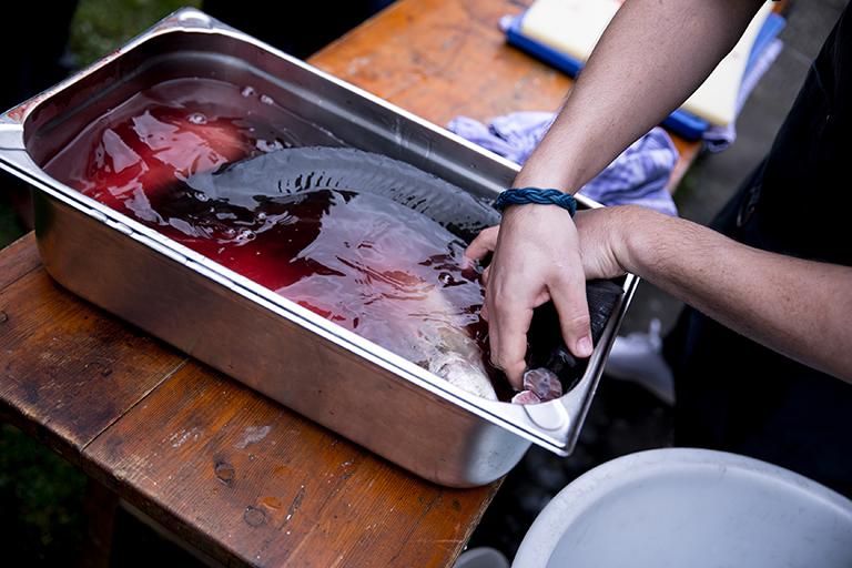 Foodaufnahme von einem toten Fisch, der in einer Schüssel mit Wasser ausgewaschen wird